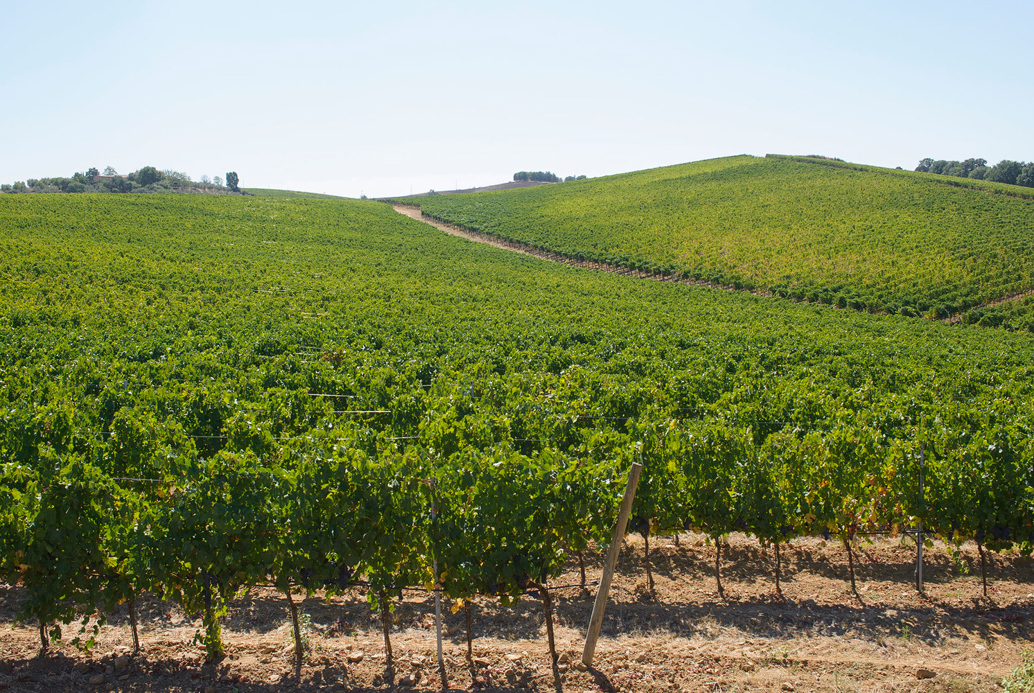 This Wine-Lover's Tour Through Tuscany Is Not to be Missed