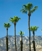 4 Tips to Shop Palm Springs's Biggest Luxury Outlet Like a Pro