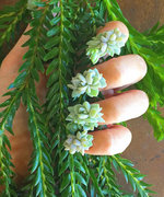 "Succulent Nails Give New Meaning to Having a ""Green Thumb"""