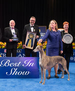 Gia the Greyhound Is Crowned Best in Show at the 2016 National Dog Show