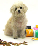 Celebrate Love Your Pet Day with These Homemade Dog Treats