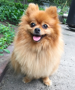 "The New Dog Shampoo That Got ""Four Paws Up"" from an <em>InStyle </em>Editor's Adorable Pomeranian"