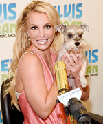 Britney Spears Cuddles with a Schnauzer in Honor of National Dog Day!