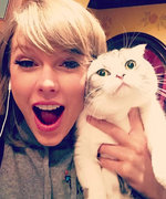 28 Times Birthday Girl Taylor Swift's Cats Embodied Her Lyrics