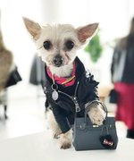 This Insta-Famous Dog Has More Bags Than Carrie Bradshaw