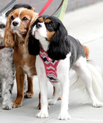 New Pet Membership Club PetHero Has Serious Perks to Help Save Money and Keep Your Pet Healthy