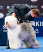 12 of the Best Photos from the 2017 National Dog Show