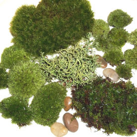 Terrarium Live Moss Assortment