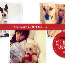 Who Is the Most Stylish Pet on Instagram? Vote Now!