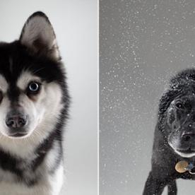 Do These Furry BFFs Look Like Their Famous Owners?