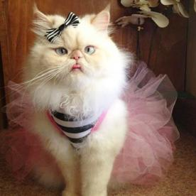 What's Right Meow: Meet Luna, the Internet's Most Fashionable Kitty