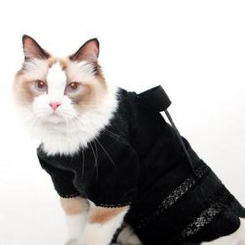 What's Right Meow: Meet This InStyle Editor's Fashionable Cat, Randy