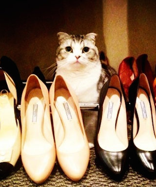 It's National Cat Day! See the 5 Most Stylish Celeb Cats of All Time