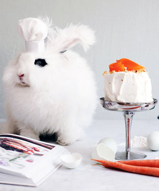 Meet the Celebrit-Bunny Who's Taking Over the Internet