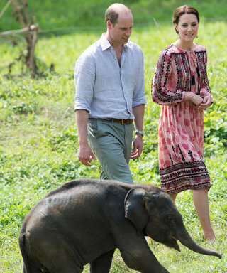 Kate Middleton Wears Pink to Care for Baby Rhinos and Elephants in India