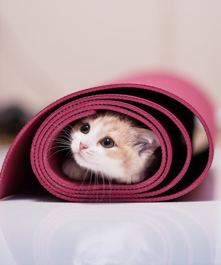 I Did Yoga with Cats at an Animal Shelter and It Was the Best Exercise Class I've Ever Taken