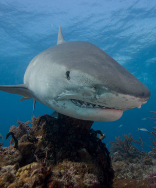 5 Shows You Can't Miss During Shark Week