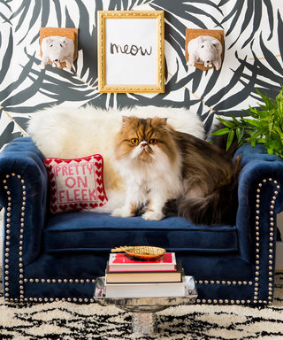 Home Tour: A Happy Space for a Grumpy Cat
