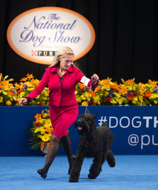 5 Fashion Rules We Learned at the National Dog Show