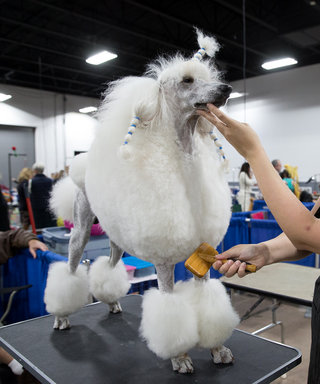 11 Luxury Dog Products from the National Dog Show
