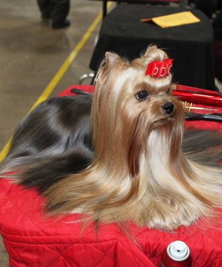 This Dog Has a Crazier Beauty Routine Than You