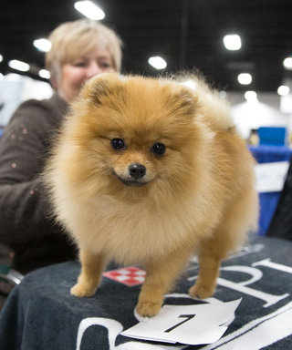 14 of the Best Photos from the 2016 National Dog Show