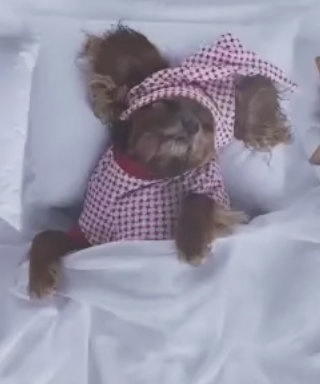 "WATCH: ""Famous"" Celebrity Dogs Parody Kanye West's Video for Charity"