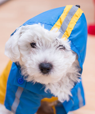 10 Stylishly Sweet Outfits for Dress Up Your Pet Day