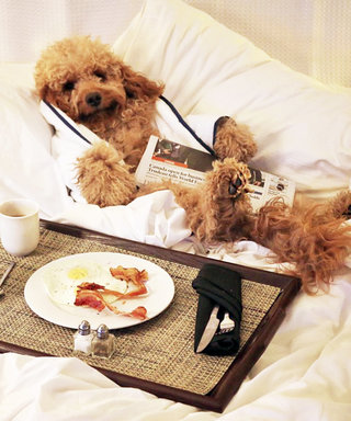 The Best Pet-Friendly Hotels for You & Your Non-Human BFF
