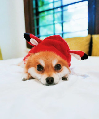 9 Rising Canine Instagram Stars You Need to Follow, Stat