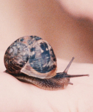 Here's Why You Should Put Snail Mucus on Your Face