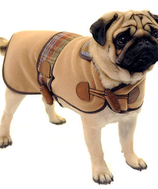 Most Stylish Gift for Dogs: Mulberry's Princess Collar Coat