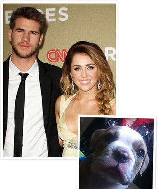 New Celebrity Pets: See the Photos!