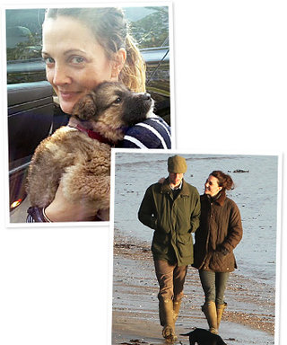 New Pet Alert: Kate Middleton and Drew Barrymore Love Their Dogs!