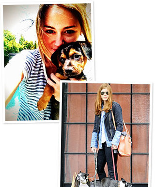 Celebrity Pet Update: Puppy Love for Miley Cyrus and Kate Mara