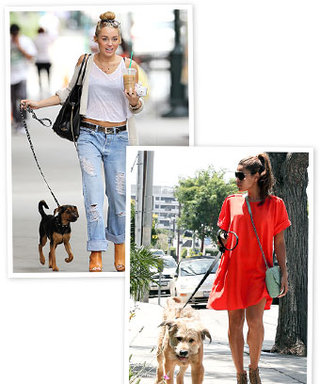 Celebrity Pets: Miley Cyrus and Eva Mendes Dog Delights