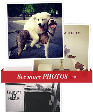 We're Obsessed: Marc Jacobs' Dog Neville Has His Own Instagram