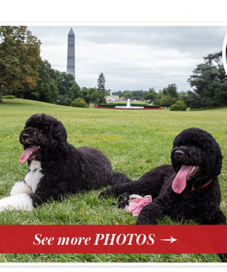 Celebrity Pet Update! See The Obama Family's New Dog, Sunny