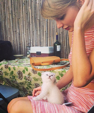Taylor Swift's Adorable Cat Olivia Benson Was Born to Fight Crime