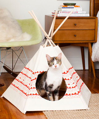 What's Right Meow: Your Cat Will Love These Cute Mini Tipis
