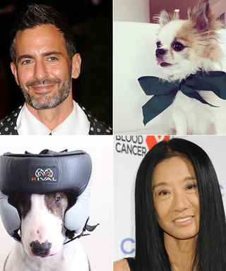 So Fetch! Can You Match These Adorable Dogs to Their Designer Parents?