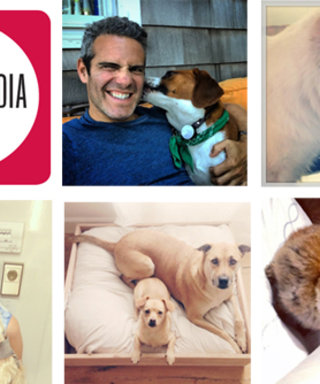 Who'll Win the Title of Super Stylish Pet? Vote in Our Second Annual Social Media Awards!
