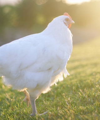 Want to Raise Chickens Like Gisele, Julia, and Jen? We've Got All the Info You Need