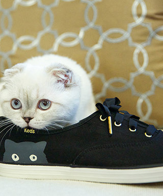 Taylor Swift's Adorable Cat Olivia Benson Models Sneakers! See the Photo