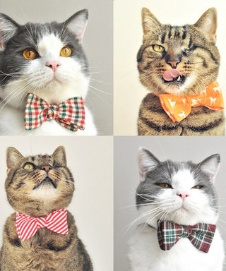 What's Right Meow: Dress Up Your Cat with These Festive Holiday Bow Ties