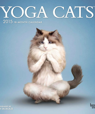 What's Right Meow: Ring In The New Year With This Pawesome Yoga Cats Calendar!