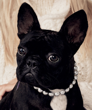 Lady Gaga's Pup, Miss Asia Kinney, Is the New Face of Coach