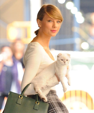 Calvin Harris Caught Taylor Swift's Cat Olivia Munching on Mariska Hargitay's VMA