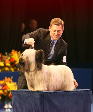 5 Things We Learned from the National Dog Show