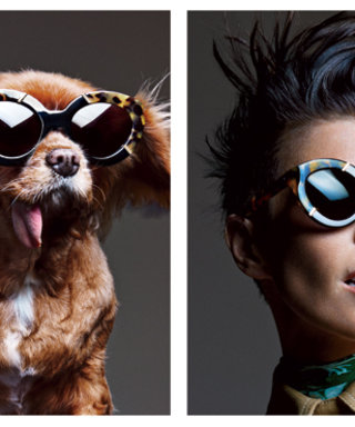 Canine Instagram Star Toast Is the New Face of Karen Walker Eyewear